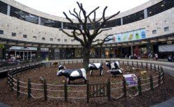 Milton Keynes. Concrete Cows