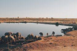 zimbabwe-christine-donaldson