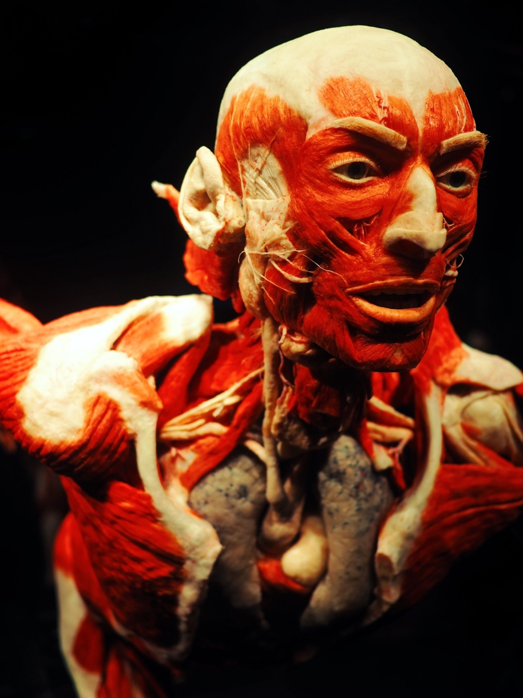 Body Worlds Is Putting Real Human Bodies On Display A Step Too Far