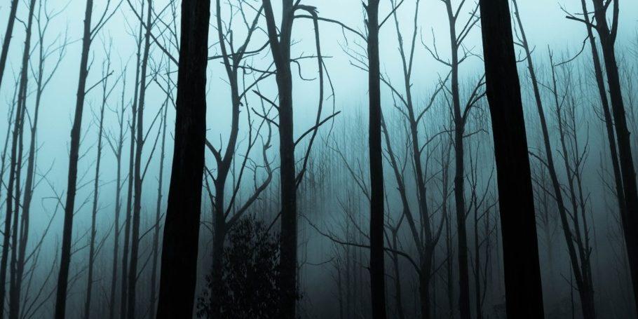 Dark forest - king