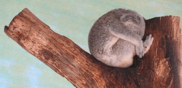 Christmas in Australia: Why I am enjoying Christmas Downunder