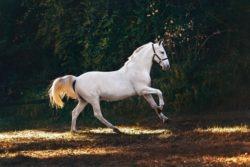 helena-lopes-horse-unsplash