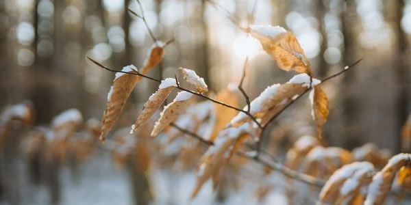 leaves with snow - january blues