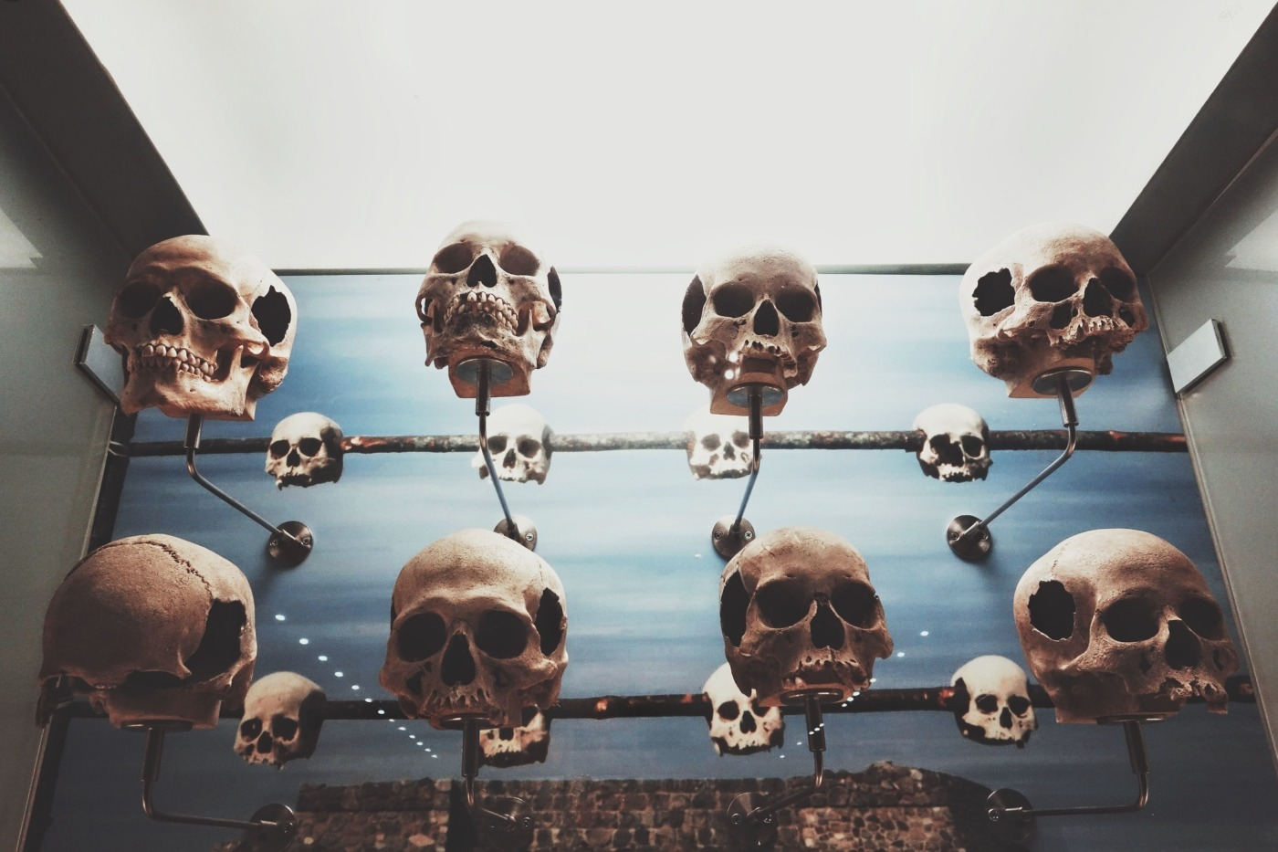 skulls on a row - charlotte