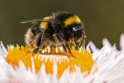 Bee by Richard Kendrick