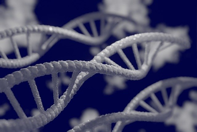 The future of genetic medicine: CRISPR explained