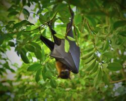 Why bat scientists are keeping their distance